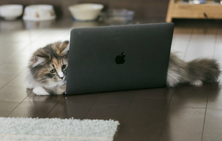 パソコンの上にいる猫